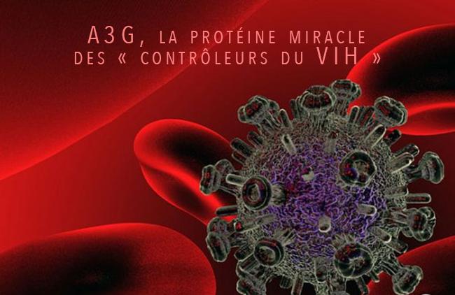 A3G, la protéine miracle des « contrôleurs du VIH »