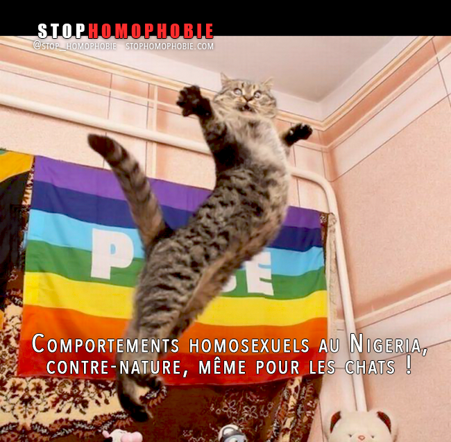 Chat gay mineur
