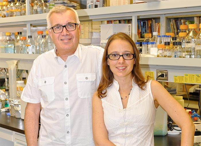 Deux scientifiques montréalais ont découvert comment le VIH parvient à duper notre système immunitaire